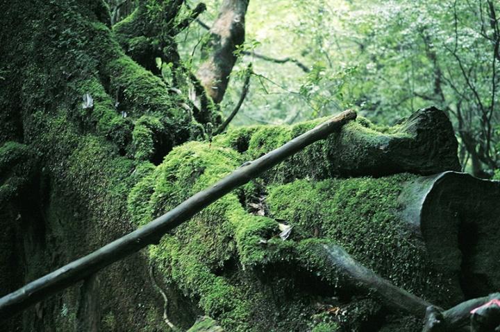 雨の屋久島旅2:白谷雲水峡へ
